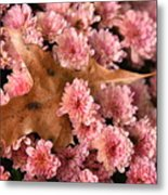 Pink Chrysanthemums With Pin Oak Leaf Metal Print