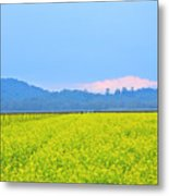 Pink Cloud Over The Mustard Fields Metal Print
