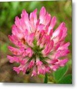 Pink Clover Flower Metal Print