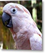 Pink Cockatoo Metal Print