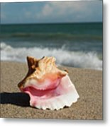 Pink Conch  Metal Print