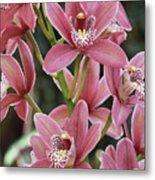 Pink Cymbidium Orchid #3 Metal Print