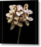 Pink Cymbidium Orchid Metal Print