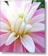 Pink Dahlias Art Dahlia Flowers Giclee Prints Baslee Troutman Metal Print