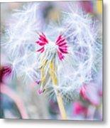 Pink Dandelion Metal Print