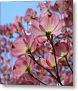 Pink Dogwood Flowers Landscape 11 Blue Sky Botanical Artwork Baslee Troutman Metal Print