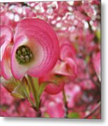 Pink Dogwood Tree Flowers Dogwood Flowers Giclee Art Prints Baslee Troutman Metal Print