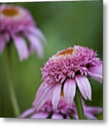 Pink Double Delight Metal Print