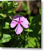 Pink Downy Phlox Wildflower Metal Print