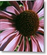 Pink Echinacea Metal Print