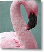 Pink Flamingo Profile 2 Metal Print