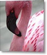 Pink Flamingo Profile Metal Print
