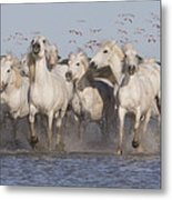Pink Flamingoes And White Horses Metal Print