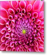 Pink Flower Close Up Metal Print