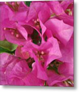 Pink Flower Composition Metal Print