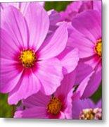 Pink Flower Conspirisy Metal Print