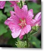 Pink Flower With Bug. Metal Print