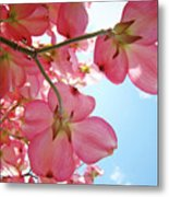 Pink Flowering Dogwood Tree Art Prints Blue Sky Baslee Troutman Metal Print