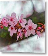 Pink Flowering Tree - Crabapple With Drops Metal Print