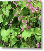 Pink Flowering Vine1 Metal Print