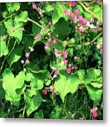 Pink Flowering Vine2 Metal Print