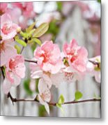 Pink Flowers And A White Picket Fence Metal Print