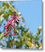 Pink Flowers At Coba Metal Print