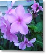 Pink Flowers In The Garden Metal Print