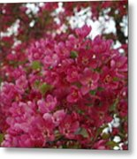 Pink Flowers On Blooming Tree Metal Print