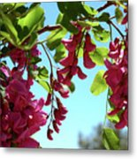 Pink Flowers Virginia City Nv Metal Print