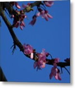 Pink Flowers With A Touch Of Ice Metal Print