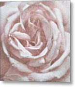 Pink Garden Rose Metal Print