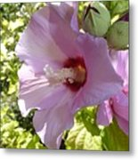 Pink Hawaiian Flowers Metal Print