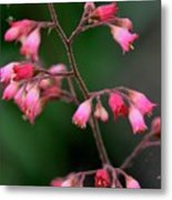 Pink Heuchera Flower 1 Metal Print