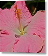pink hibiscus I Metal Print