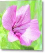 Pink Hollyhock Flower Metal Print