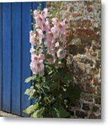 Pink Hollyhocks Growing From A Crack In The Pavement Metal Print
