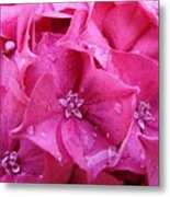 Pink Hydrangea After Rain Metal Print