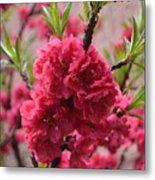 Pink In Bloom Metal Print