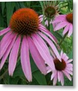 Pink In The Garden Metal Print