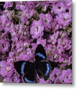 Pink Kalanchoe And Black Butterfly Metal Print