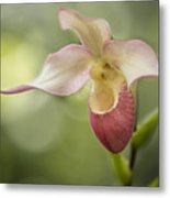 Pink Lady Slipper Metal Print