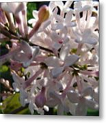 Pink Lilac Blossom Metal Print