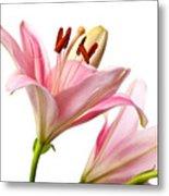 Pink Lilies 03 Metal Print