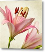 Pink Lilies Metal Print