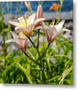 Pink Lily By The Lake Metal Print