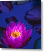 Pink Lily Glowing Metal Print
