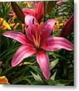 Pink Lily Lush Garden Metal Print