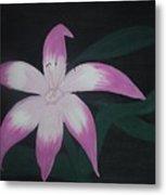 Pink Lily Metal Print by Melanie Blankenship