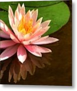 Pink Lily Reflection 4 Metal Print